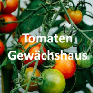 TomatenGewächshaus kaufen